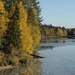 Осенняя Илекса